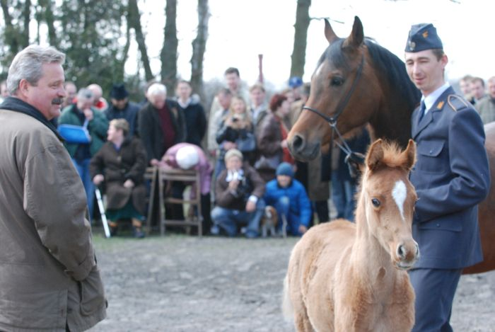 Dr Marek Trela and the colt Paladid 2008 (Al Adeed Al Shaqab - Pianosa) called Stefan. Inspection in Janów Podlaski (2008). By Mateusz Jaworski