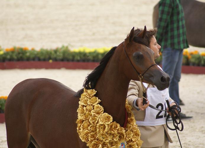 Sultanat Al Shaqab, fot. Monika Luft