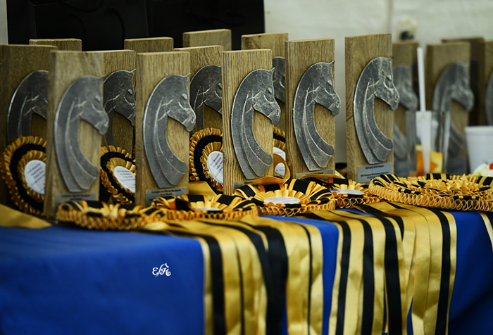 The trophies from Białka, by Ewa Imielska-Hebda