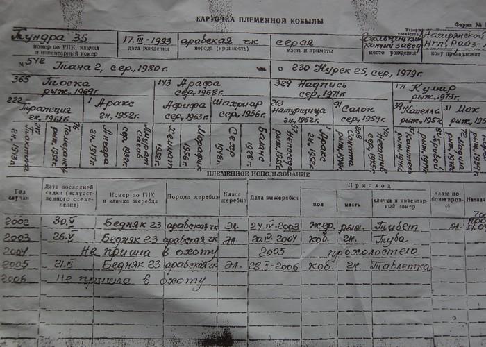 Kopia rodowodu i karty hodowlanej klaczy Tundra