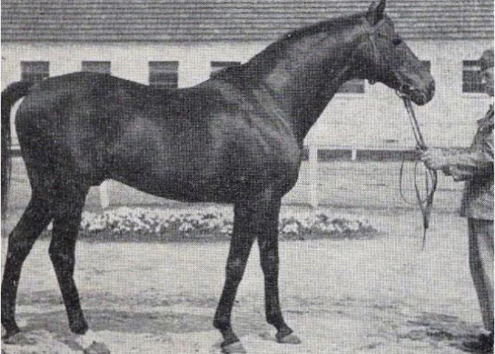 Og. Turysta, zdjęcie z numeru zerowego Konia Polskiego