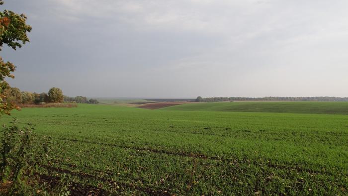 The fields of Jarczowce. By Krzysztof Czarnota