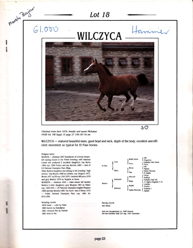 One of the pages of the auction catalogue 1981, with personal notes by Marek Grzybowski. El Paso daughter Wilczyca was purchased by Armand Hammer