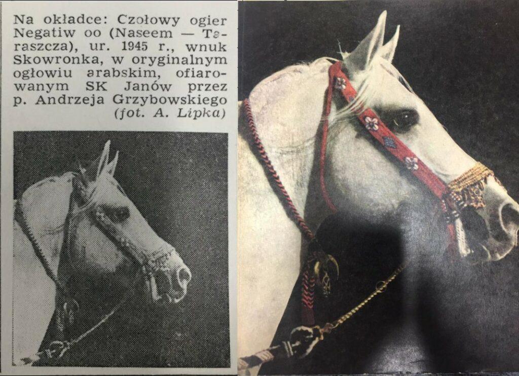 Okładka Konia Polskiego, źródło: Koń Polski 1 (73), 1984