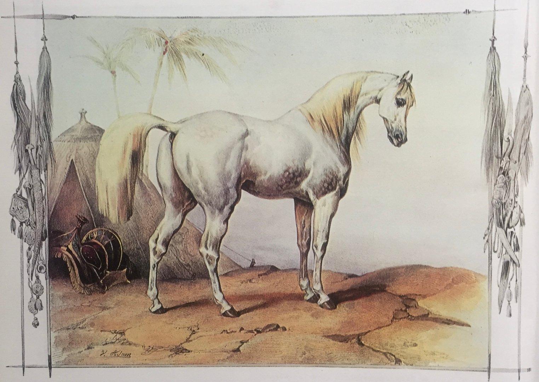 Klacz arabska, Victor Adam, ze zbiorów Biblioteki Narodowej w Warszawie, fot. archiwum