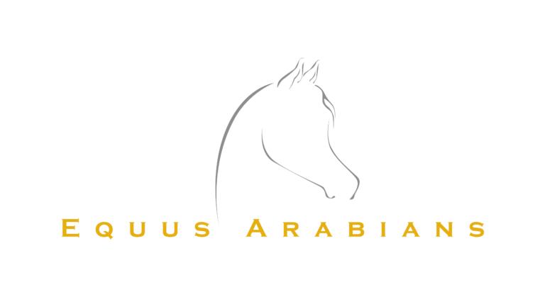 Equus arabians