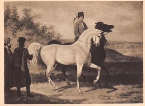Arabian horse presentation, author: January Suchodolski, source: Wikimedia