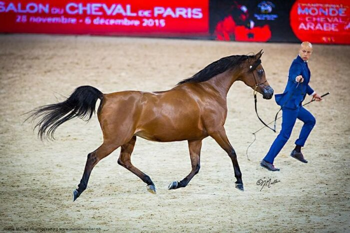 Pinga during the World Championship 2015 in Paris, by Joelle Müller Photography