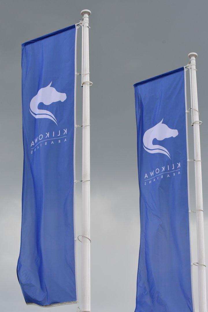 Flagi z logotypem Stadniny Klikowa Arabians witają przybyłych gości, fot. Mateusz Jaworski