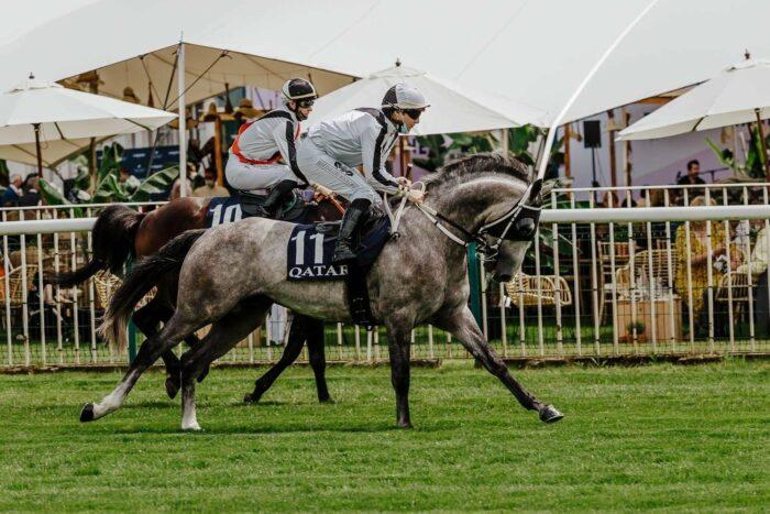 Mayar Al Khalediah, 5. miejsce w Qatar Derby Pur-Sang w Chantilly, fot. Zuzanna Lupa