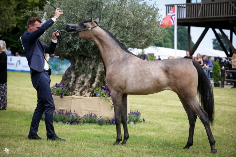 Nouf Al Faisaly (Cyclone OS - Eleanor MJ by Empire), Silver Medal Junior Fillies Int. B Show, by Henrike Hörmann