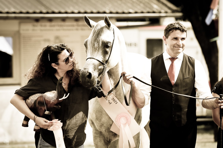 AJ Elaf (AJ Mardan - AJ Estrella by Shael Dream Desert), Gold Medal Senior Stallions Int. B Show, by Henrike Hörmann