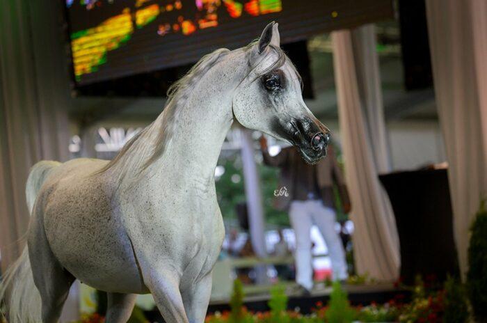 Emandorissa (Abha Qatar - Emanda), Lot 6, sprzedana za 450.000 euro, fot. Ewa Imielska-Hebda