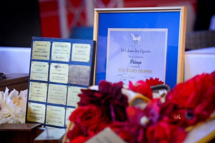 Nagroda WAHO 2021 dla klaczy Palanga, fot. Ewa Imielska-Hebda