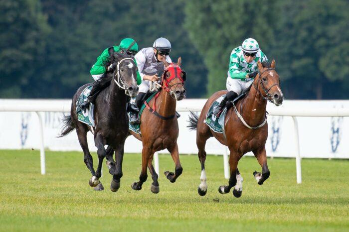 Al Faisal - the winner of Emaela – Wathba Stallions Race, by Tor Wyścigów Konnych Służewiec